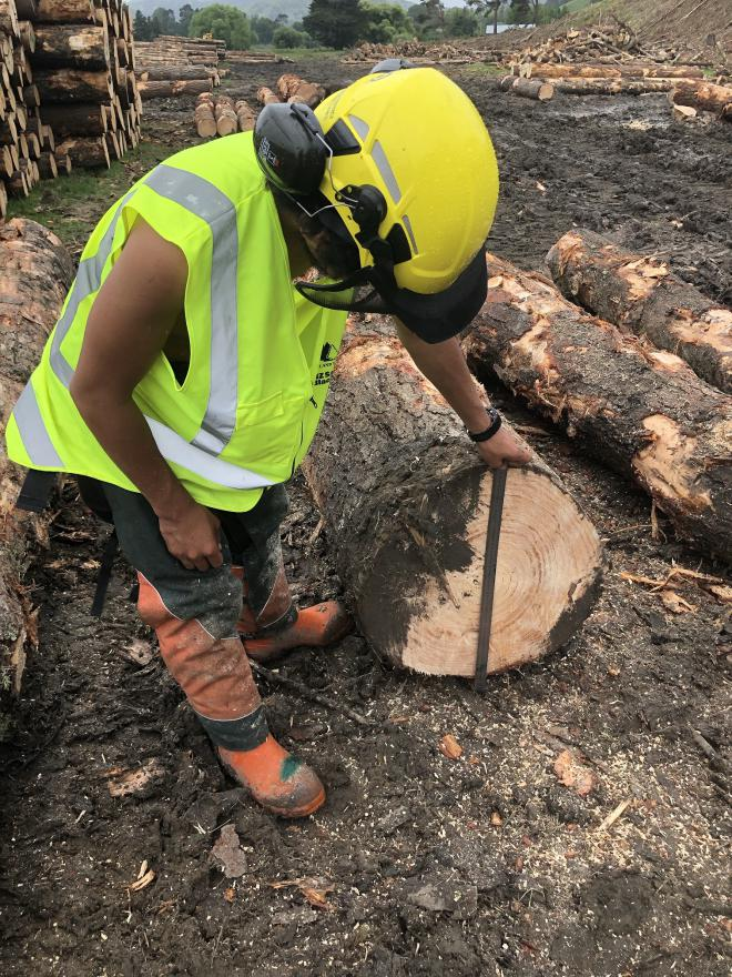 New Zealand Certificate in Forest Harvesting Operations with Strands